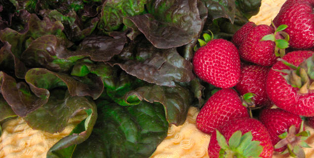 Fresh Red leaf lettuce and strawberries from Salinas Valley farms