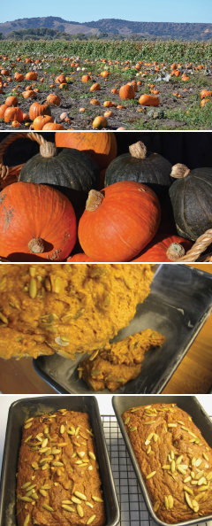 Pumpkins from field-to-table