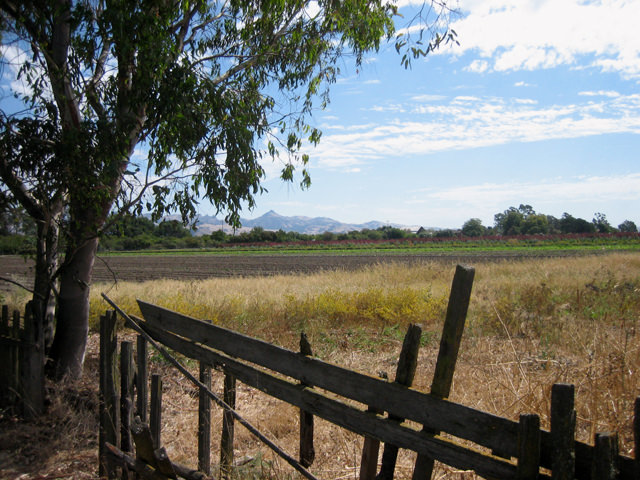 Field and fence in Hollister near tomato farm