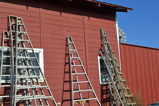 Orchard ladders parked for the season