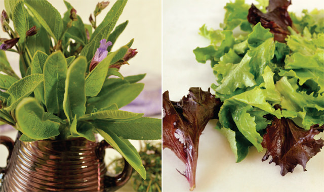 Fresh herbs and heritage lettuce