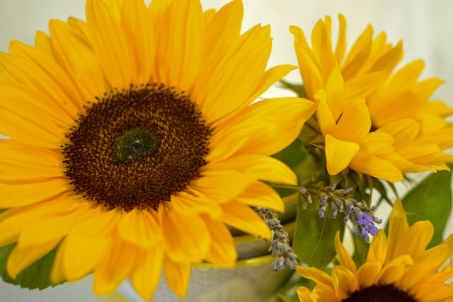 Sunflowers in a bowl
