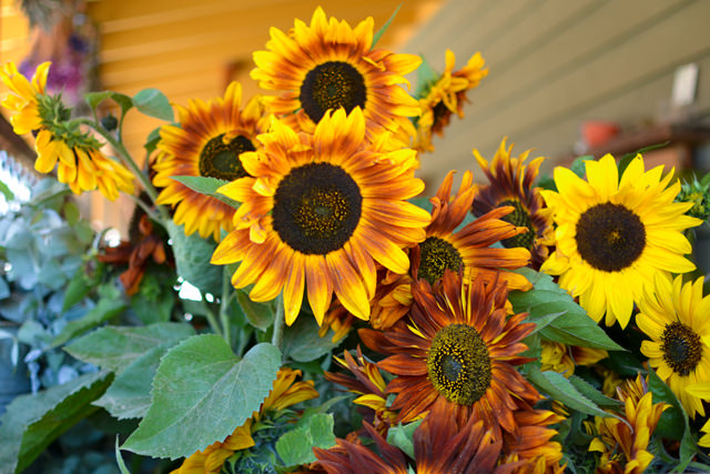 Sunflowers at the farm stand