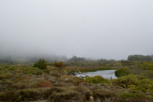 Along Highway 1, south of Pescadero