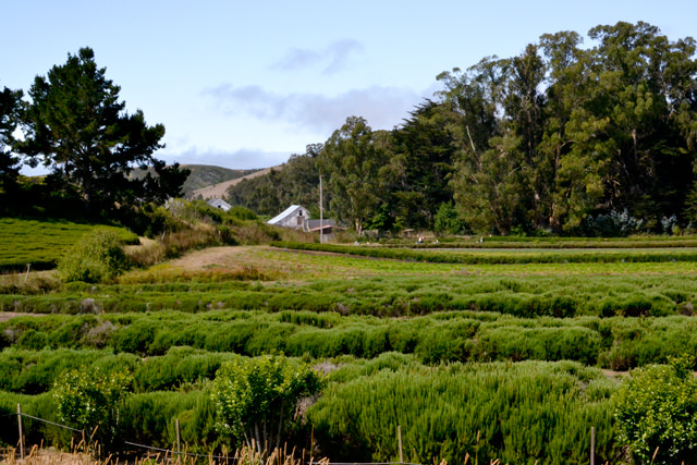 Jacob's Farm