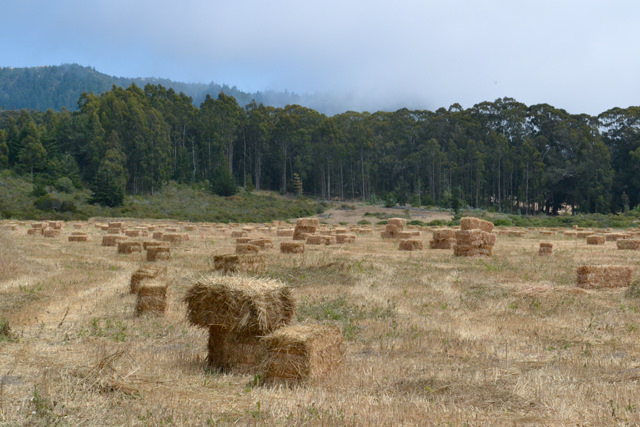 Baled hay along Highway 1, south of Pescadero