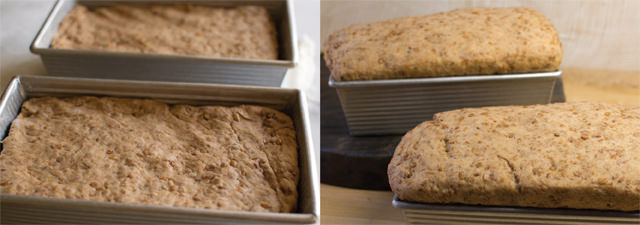 Loaves of Wheat Berry Bread