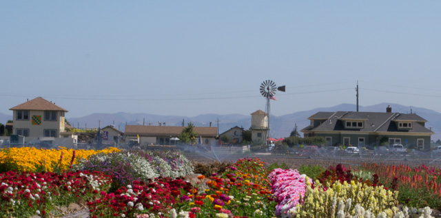 The Farm, Salinas, California