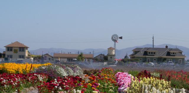 The Farm, Salinas, California