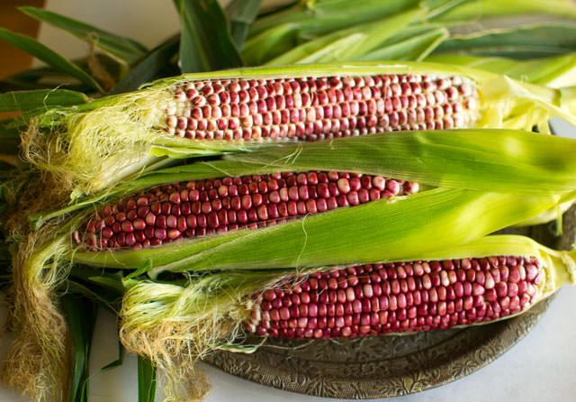 Ruby Jewel Red Corn