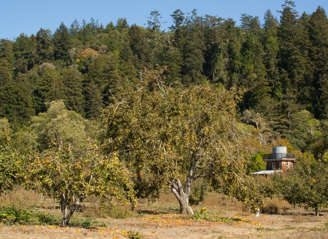 Everett Family Farm Apple Orchard